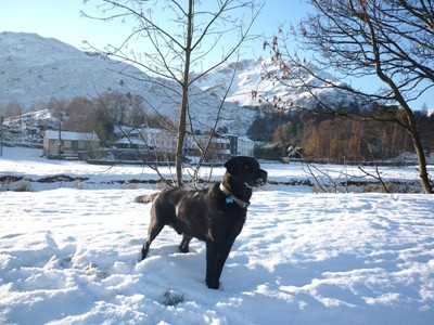 Morgan in the Snow by Goldrill Beck in Patterdale
