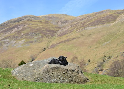 Farm Experience Days in the Lake District