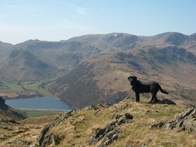 Morgan above Brotherswater